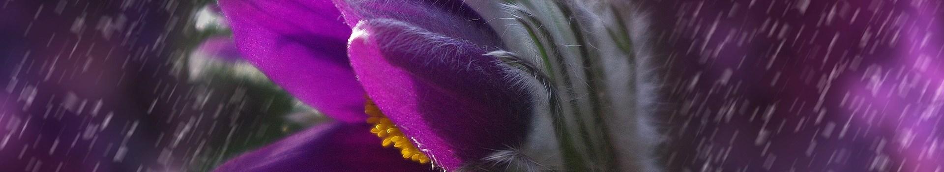 Kiva | wild flower
