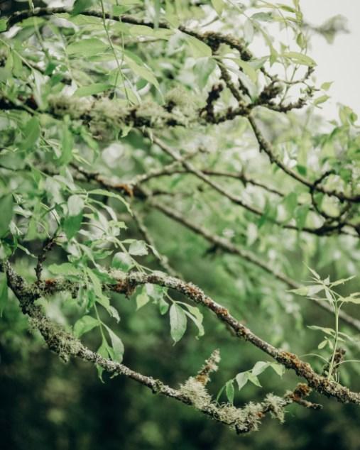 meriandtommy-stephanie-louise-green-photography-weddings-36