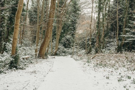 oscar-bigboots-stephanie-louise-green-pet-photography-photographer-in-north-london-n7-n8-highgate-crouchend-hampstead-muswell-hill-cute-dog-in-snow-winter-patterdale-collie-terrier-1