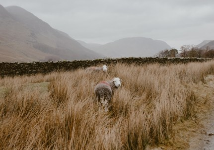 stephanie-green-wedding-photography-lake-district-patterdale-village-white-lion-old-english-pub-cumbria-22