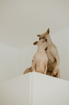 stephanie-green-weddings-modern-family-portrait-pet-family-dog-sphynx-cat-contemporary-london-uk-100