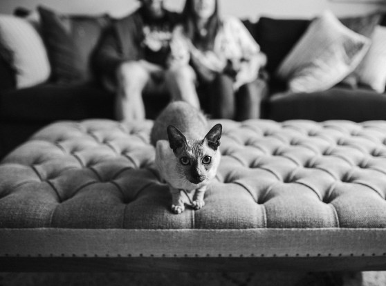 stephanie-green-weddings-modern-family-portrait-pet-family-dog-sphynx-cat-contemporary-london-uk-25