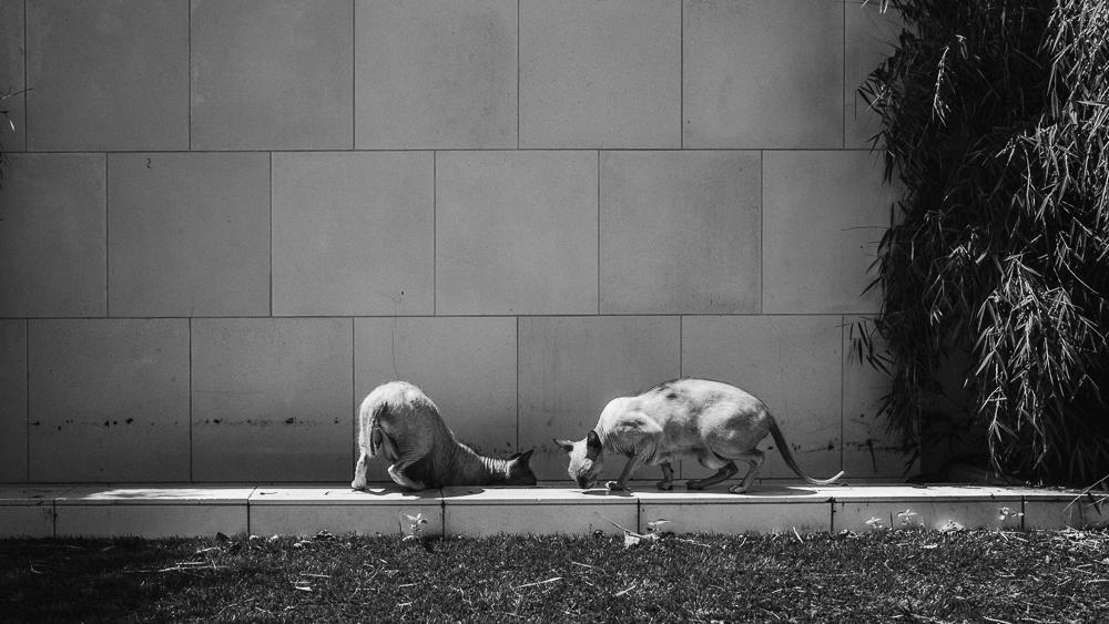 stephanie-green-weddings-modern-family-portrait-pet-family-dog-sphynx-cat-contemporary-london-uk-88
