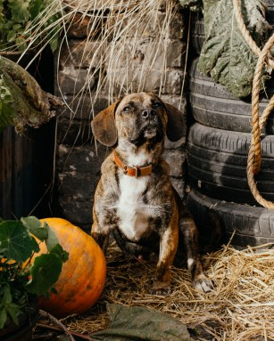 stephanie-green-london-content-creator-social-media-management-doggy-daycare-hairy-hounds-in-hackney-137