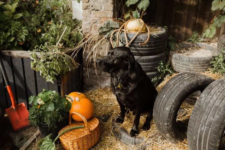 stephanie-green-london-content-creator-social-media-management-doggy-daycare-hairy-hounds-in-hackney-218