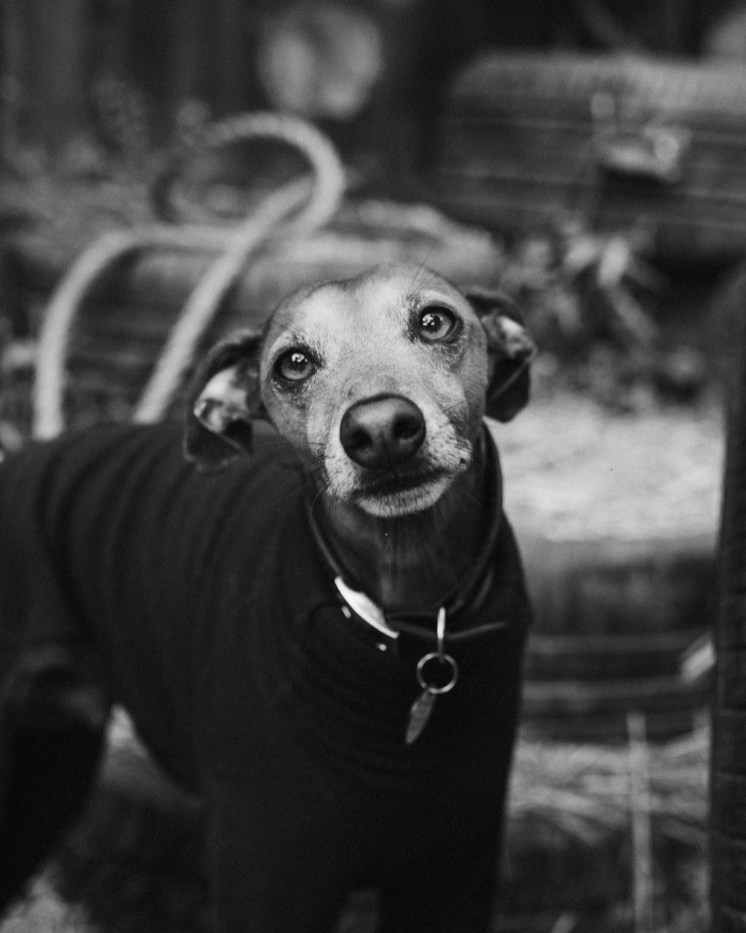 stephanie-green-london-content-creator-social-media-management-doggy-daycare-hairy-hounds-in-hackney-243