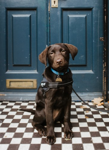 stephanie-green-weddings-puppy-portrait-ryan-jyothi-chocolate-lab-dog-pawtraits-walthamstow-london-47