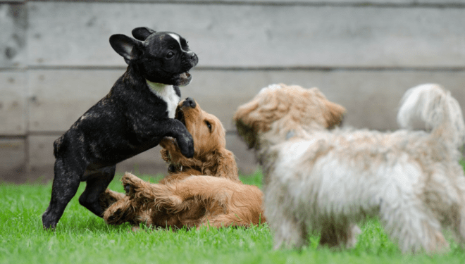 We say our dogs are part of the family, but are you sure you're being the best pet parent? Here are nine ways to treat your pup right and be a better dog owner.