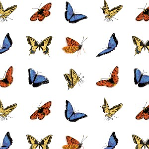 StephanieDesbenoit-poster-insects-butterfly-1