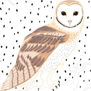 StephanieDesbenoit-wallpaper-birds-owl-0