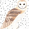 StephanieDesbenoit-wallpaper-birds-owl-0
