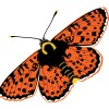 StephanieDesbenoit-wallpaper-insects-butterfly-0