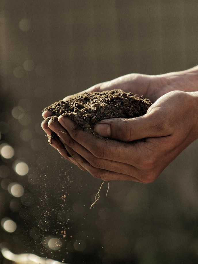 Healthy Soil Is Important and Composting Helps Produce It