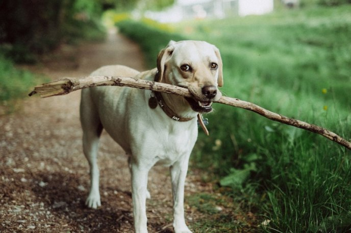 Dog friendly off leash parks in portland