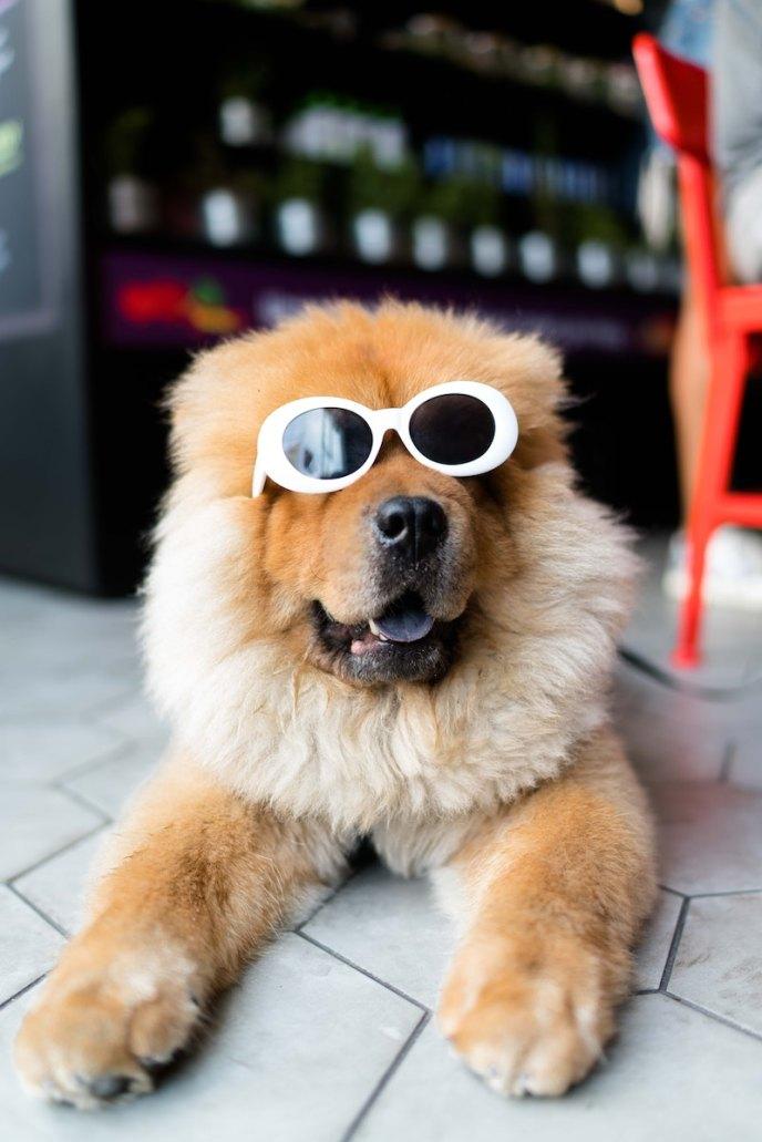 Dog friendly portland boasts dog friendly restaurants