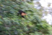 Is it a bird? A flying squirrel?
