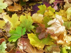 Layers of autumn/Crisping lemon-lime and rust/Swishing underfoot