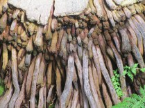 Undulating roots/Nature's unending layers/Are fed by the rain
