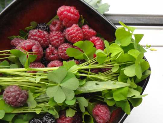 Bowl of berries with wood sorrel