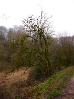 Spaziergang rund um Hillesheim