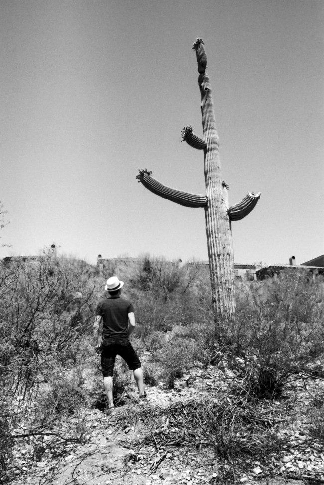 fedora'd man looking up at saguaro
