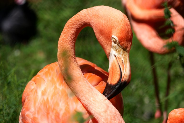 flamingo-photography-splenner