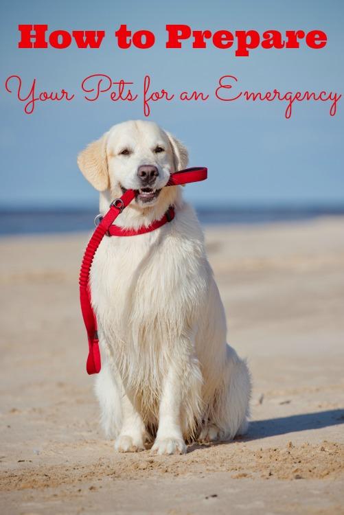prepare-pets-emergency