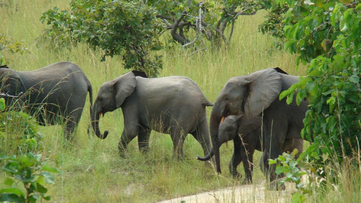 Finding Friendships in Secretive Elephants