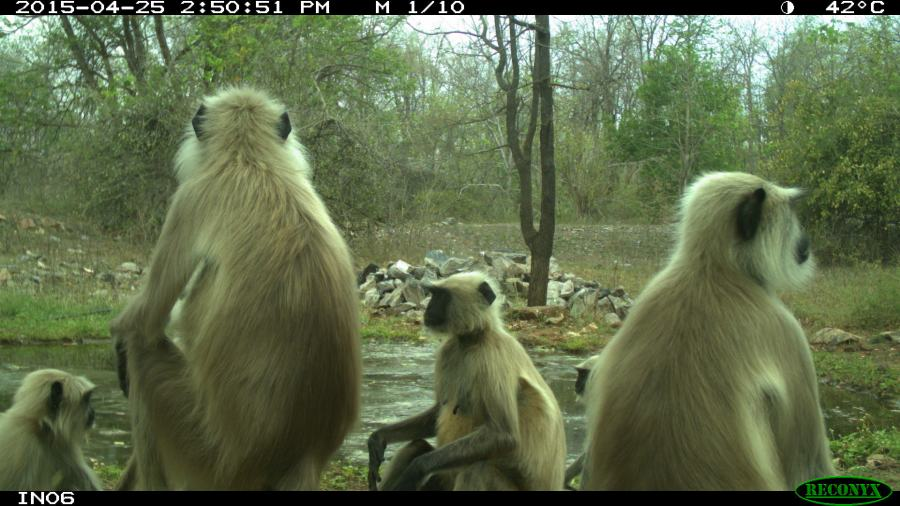 Camera Trap Photos from India