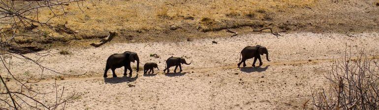 Elefant family, Tanzania