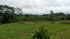 ubud-bali-campuhan ridge walk 04 (1)