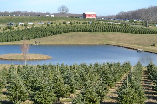 Pine Valley Farms