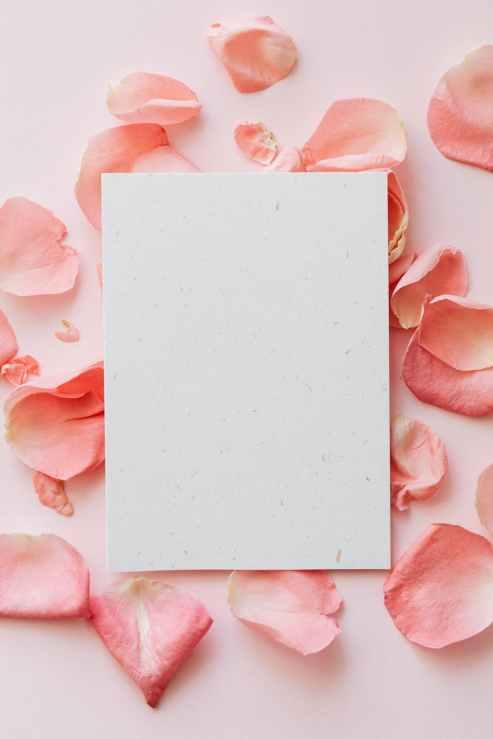 fresh flowers petals and sheet of paper on pink surface