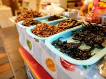 Pattaya City (floating market): I didn't actually try anything here. I've had meal worms fried before, I'm good.
