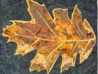 November Fallen