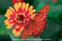 Deep Orange Butterfly