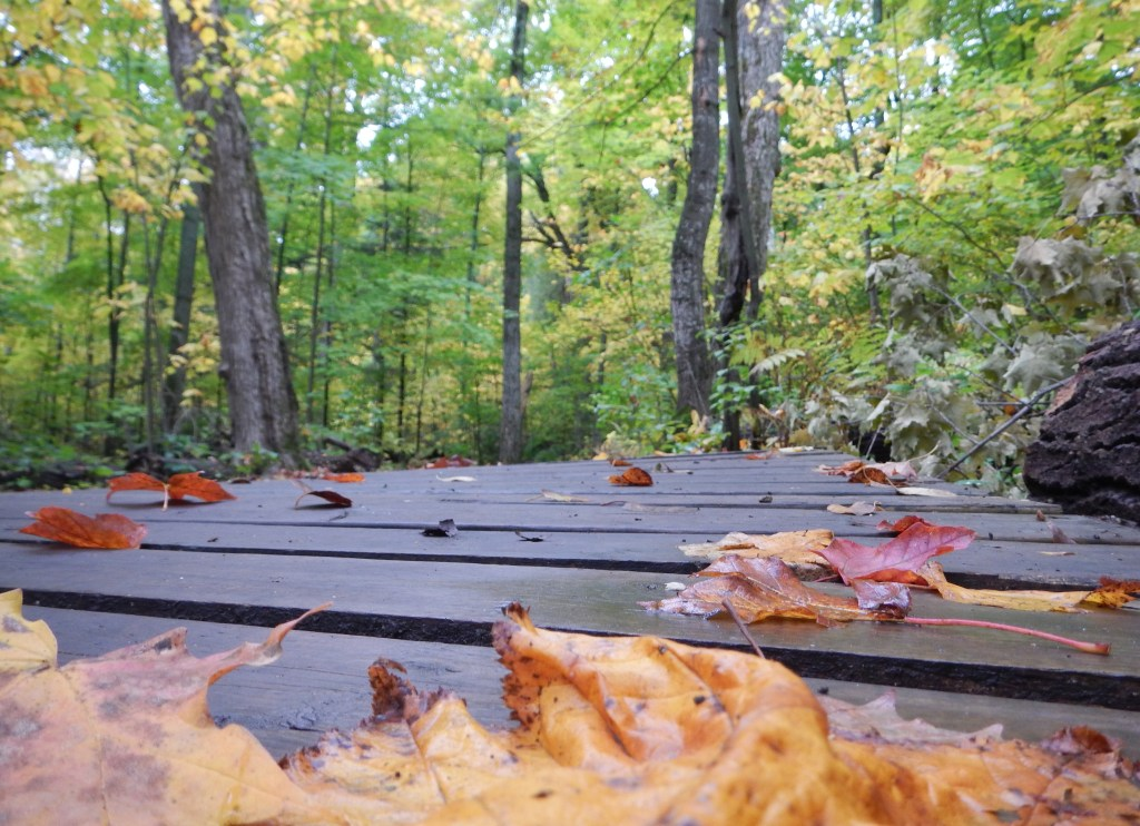 A new boardwalk in the fall