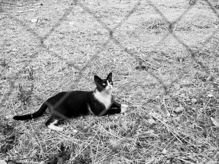 Kalami Cats