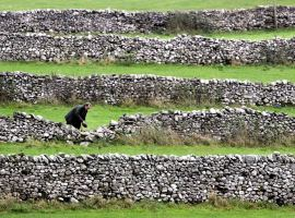 Wharedale drystone waller