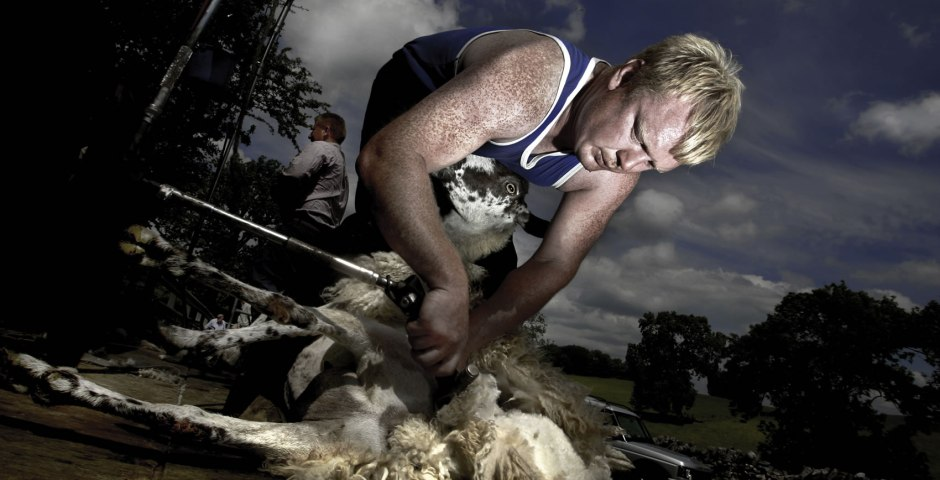 sheep shearing in Wharfedale