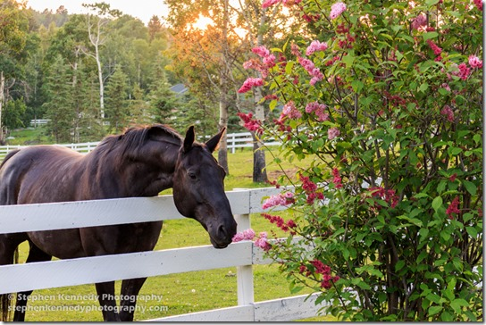 Horse Smelling Flowers