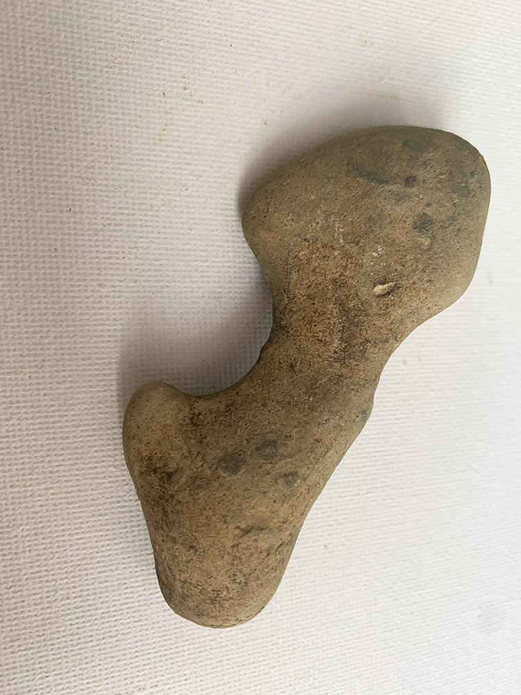 Neolithic Dinner / Pig or Wild Boar Humerus