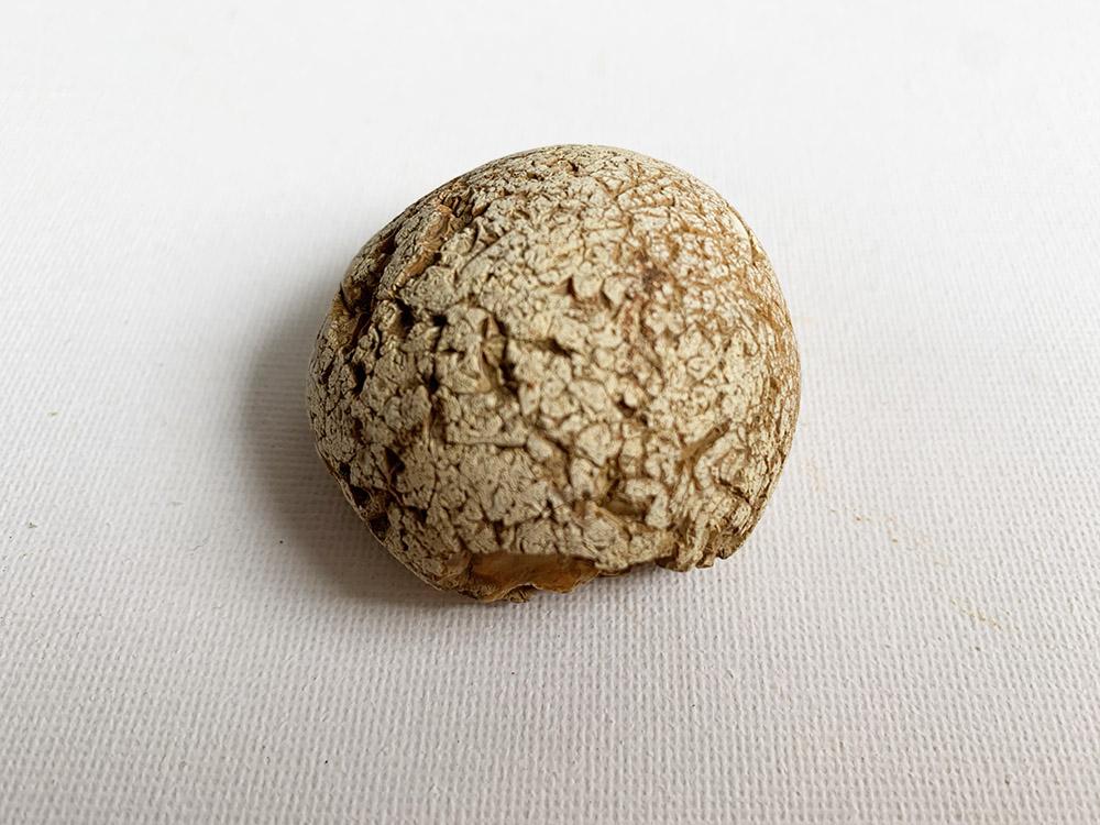 Neolithic Hammer-Stone