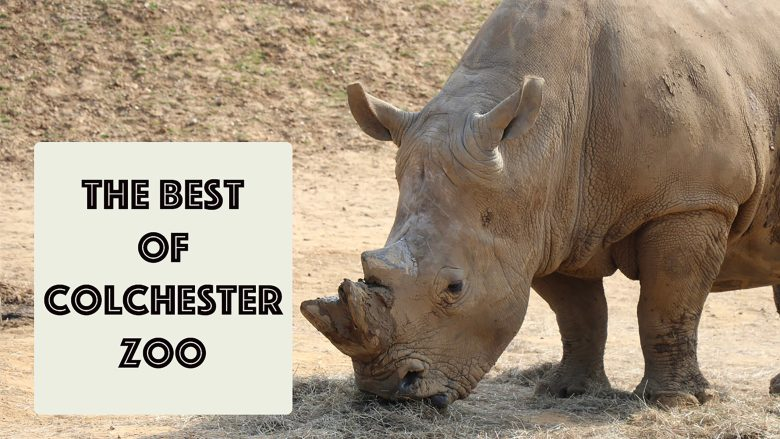 The best of Colchester Zoo | Days out in Essex | Wildlife | Family | Stephen and Yhana | Vlog 27