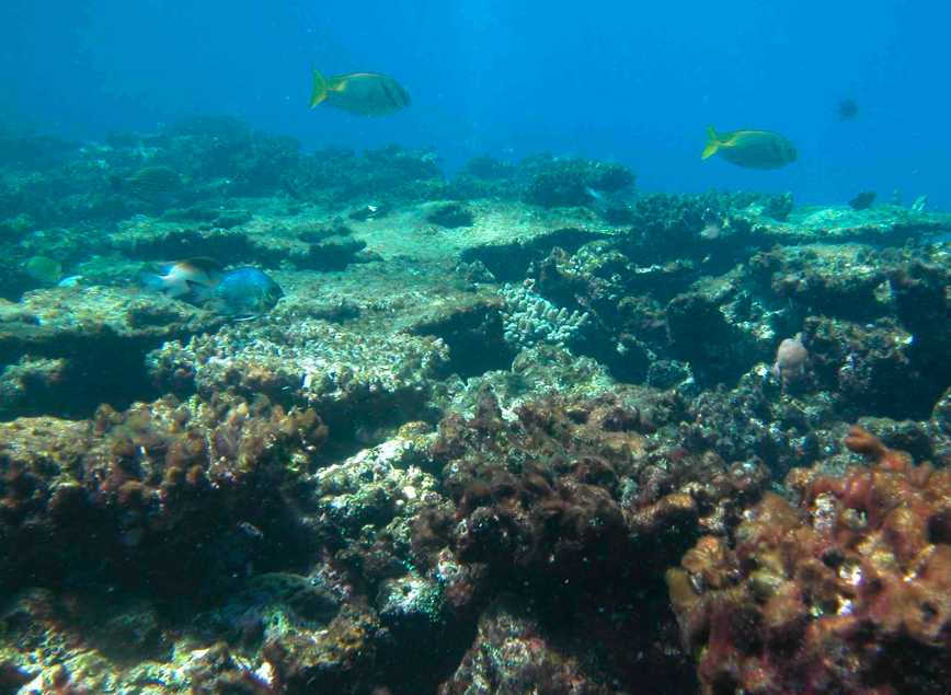 severely-degraded-reef-flat-at-kelso-reef-great-barrier-reef-australiaimage-c2a9-cathie-page-very-sml