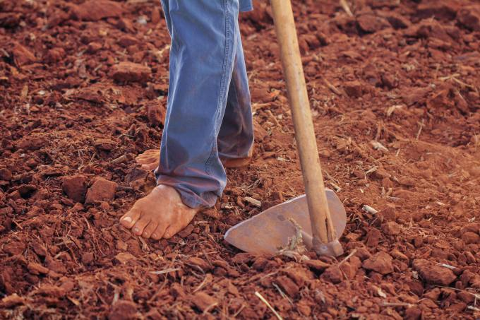 agronomy-barefoot-farm-1615784.jpg