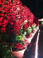 The whole property was lined with red roses