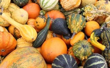 pumpkin-2805940_1280 (1)