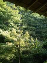Ryoan-ji Temple, Kyoto 33_Stephen Varady Photo ©