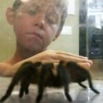 Evaluating spider sizes